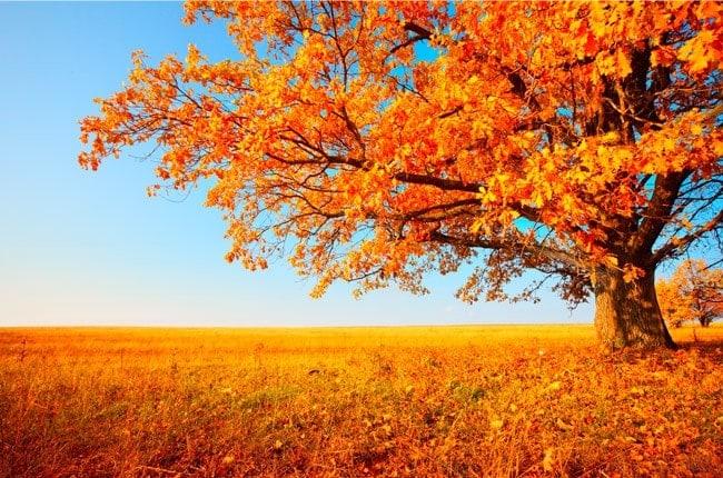 Falling Maple Leaves Wallpaper Fotomurales 193 Rbol Oto 241 O