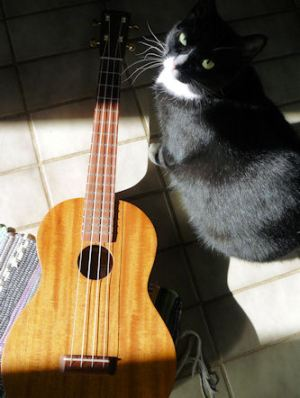 Uke and cat