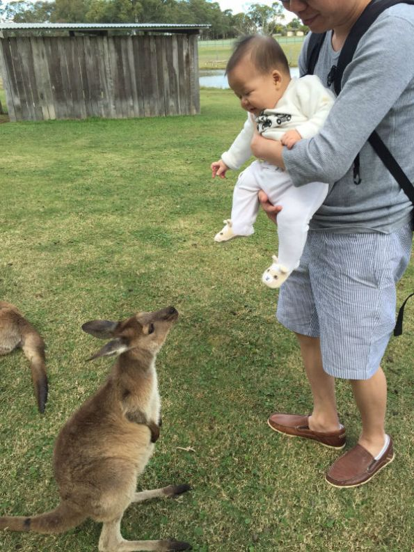 Oli looking at Kangaroo