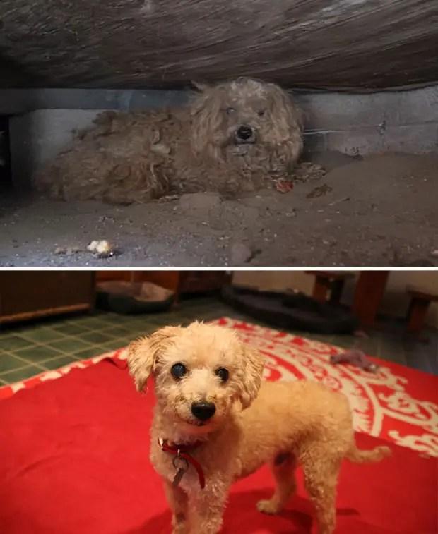 ad perros rescatados12