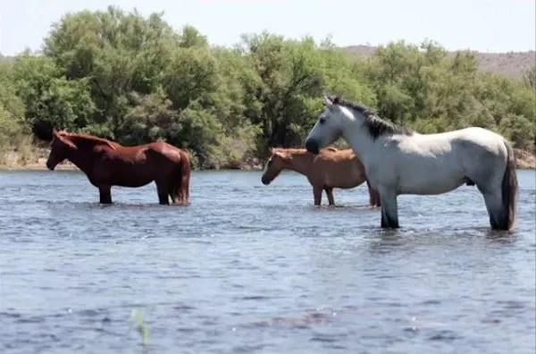 04-wild-horse-rescue