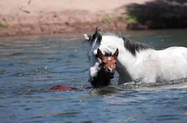 09-wild-horse-rescue