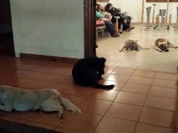 perros callejeros asisten al funeral de mujer (1)