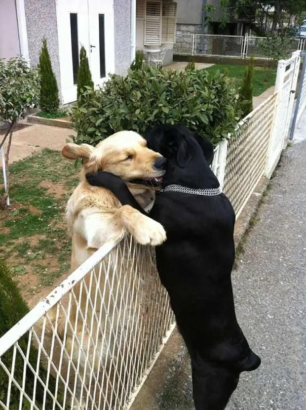 abrazo-perros