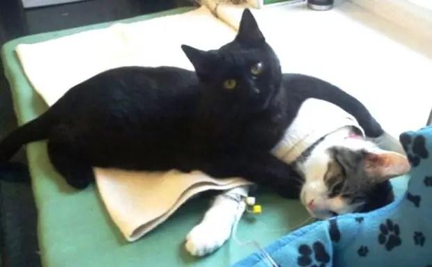 gato-negro-enfermero-polonia