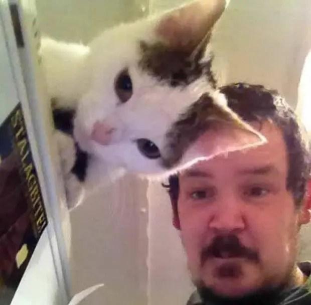 gato transparenet