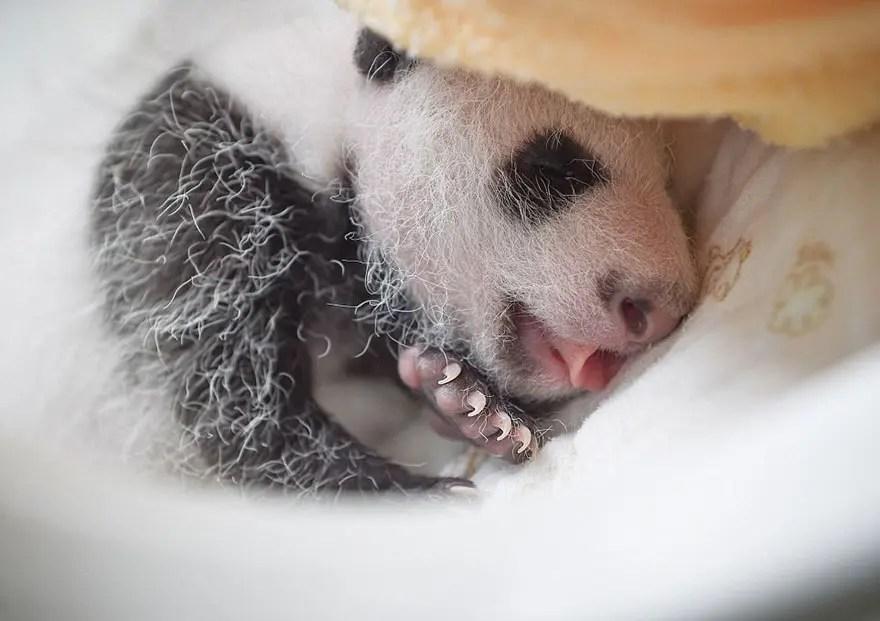 panditas-bebes-en-canastas-3