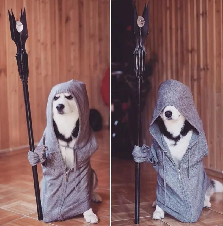 siberian-husky-dog-instagram-erica-tcogoeva-13