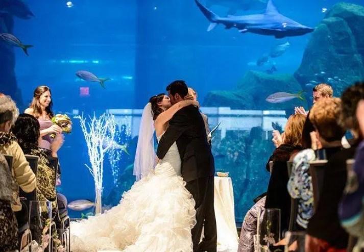 boda-acuario11