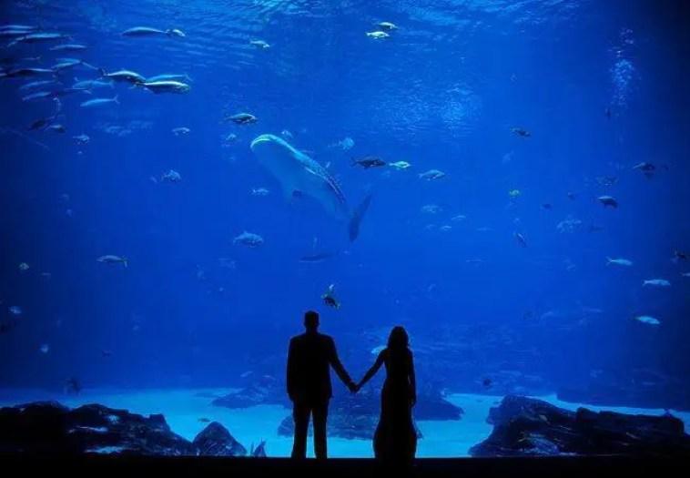 boda-acuario17
