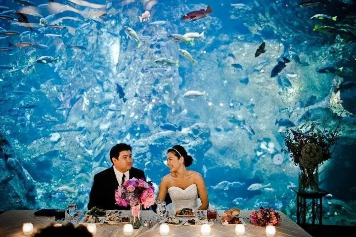 boda-acuario3