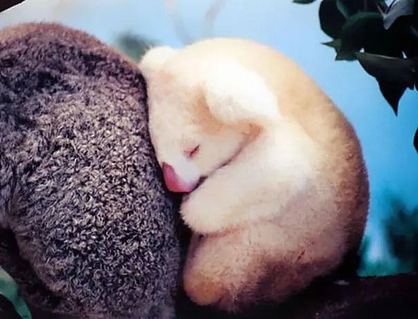 adorables animales bebe 15