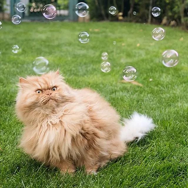 garfi-gatito-malhumorado-21