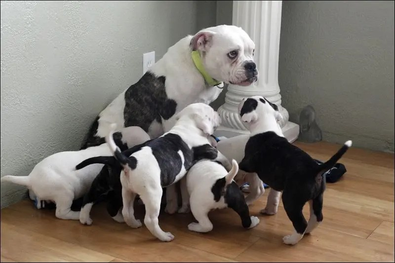 perros-cachorritos14