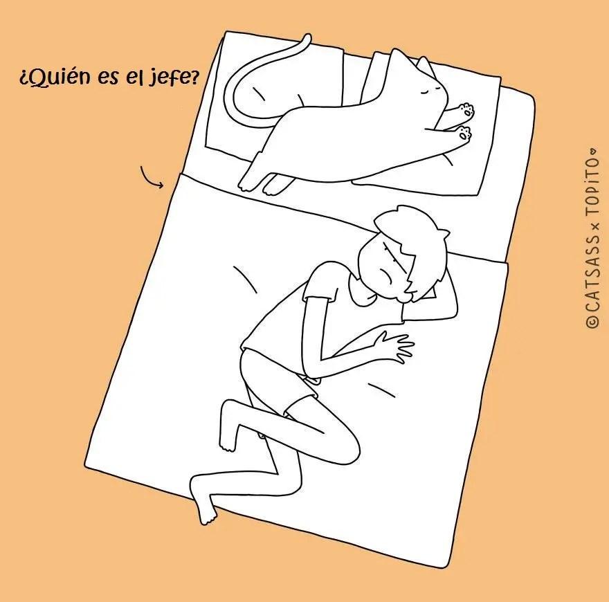10-posiciones-para-dormir-con-tu-gato2
