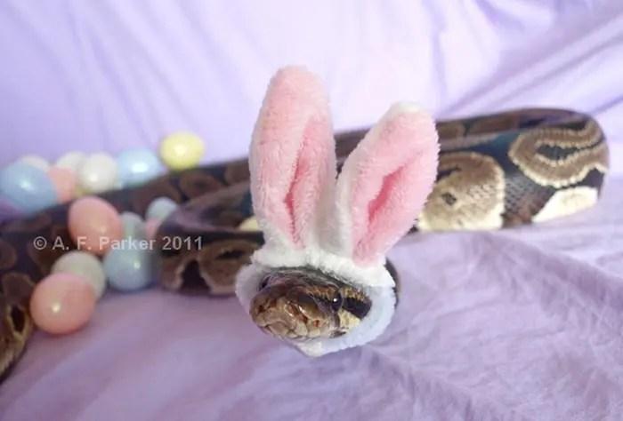 sombreros serpientes 15