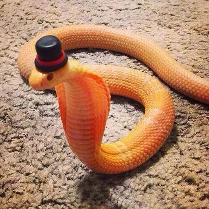 sombreros serpientes 8