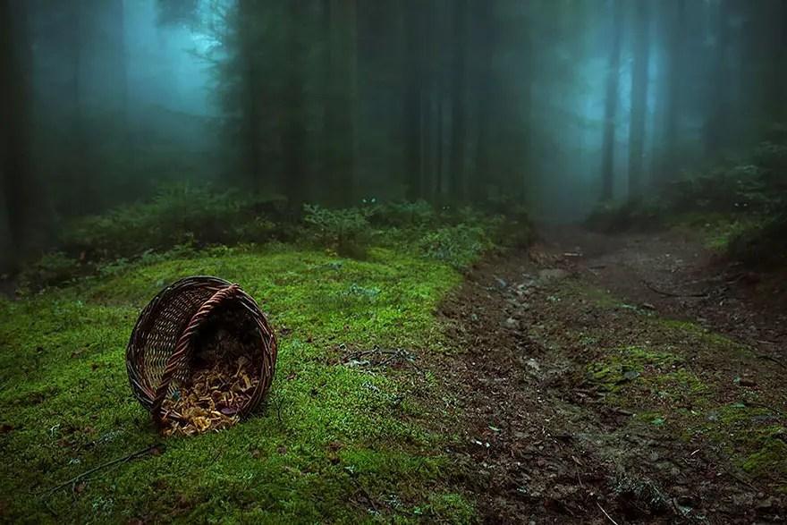 bellos bosques 13
