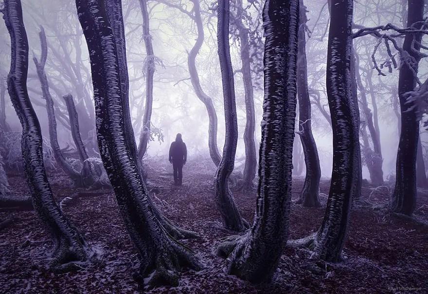 bellos bosques 14