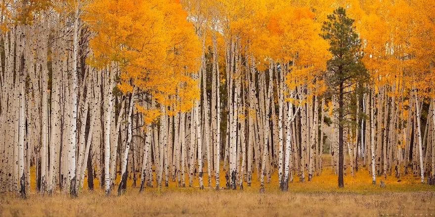 bellos bosques 16
