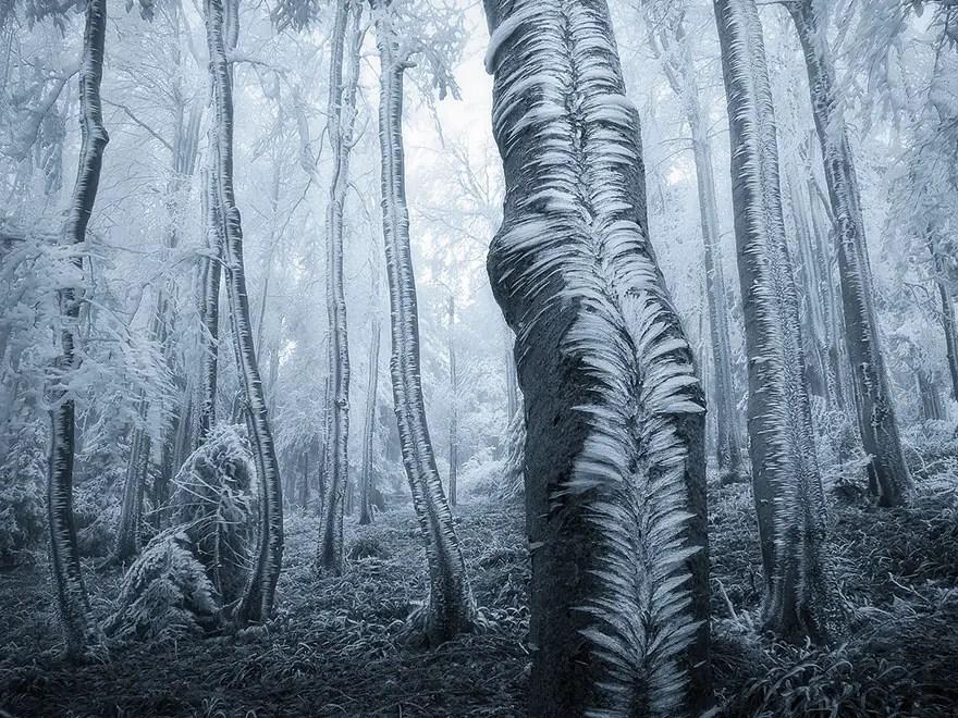bellos bosques 4