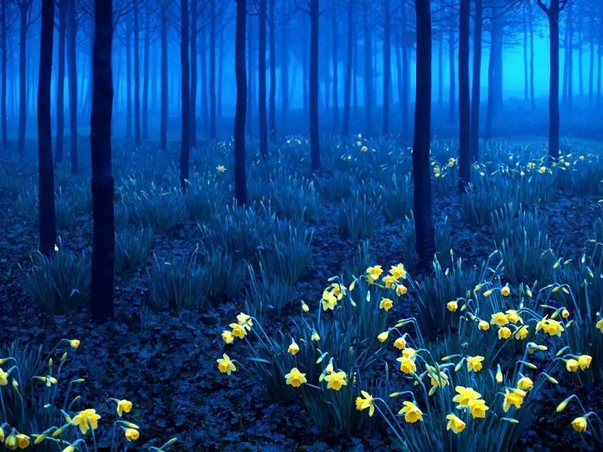 bellos bosques 7