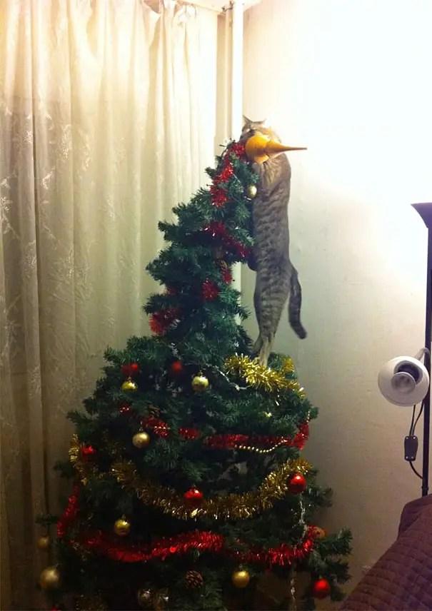 gatos-decorando-arbol-de-navidad14