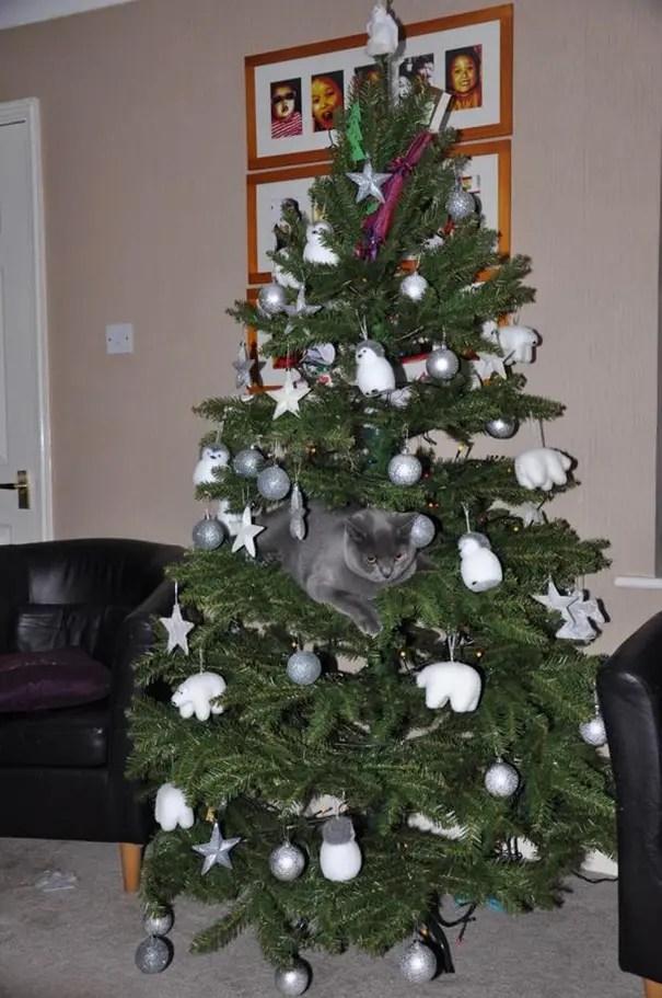 gatos-decorando-arbol-de-navidad20
