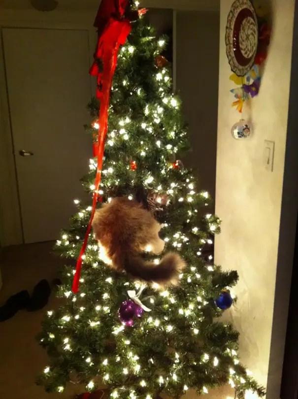 gatos-decorando-arbol-de-navidad6