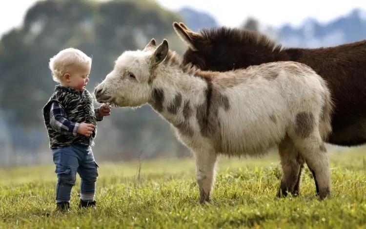 13-razones-para-tener-un-burro-bebe1