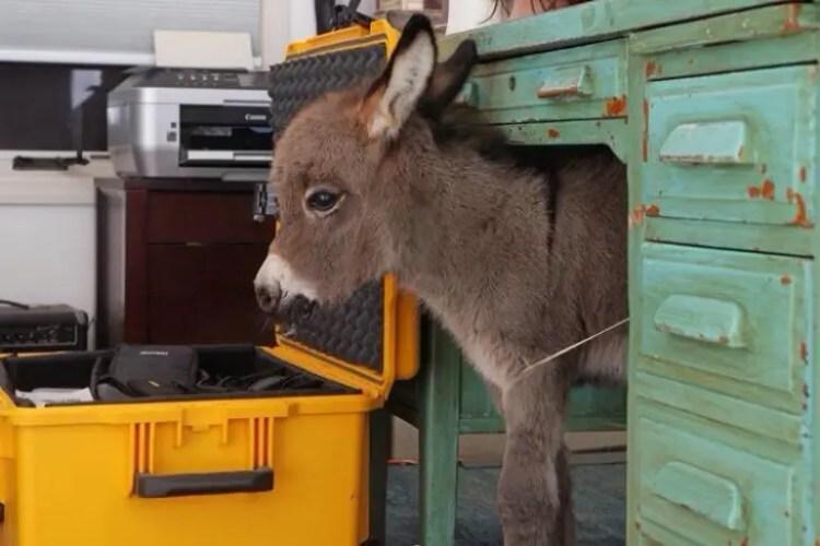 13-razones-para-tener-un-burro-bebe2