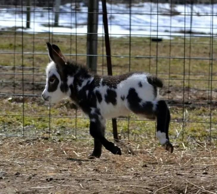 13-razones-para-tener-un-burro-bebe5