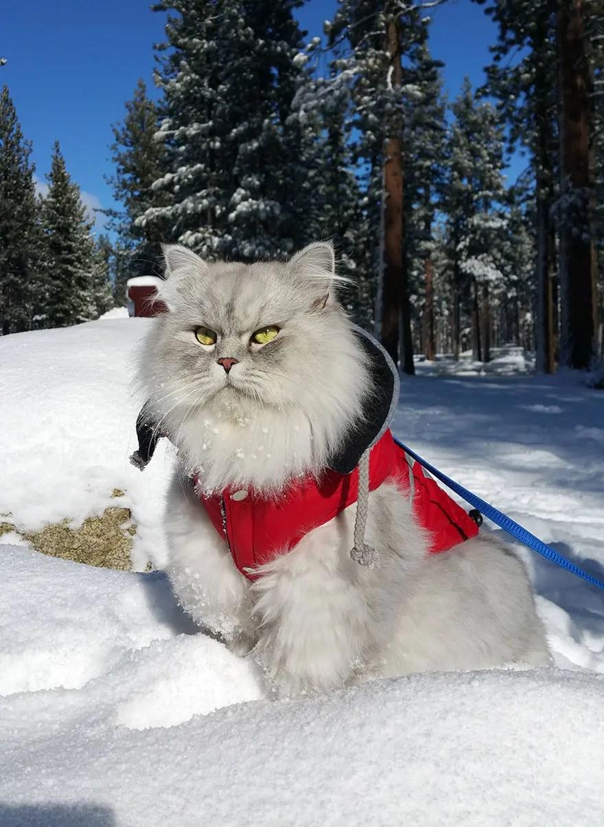 gandalf el gato 5