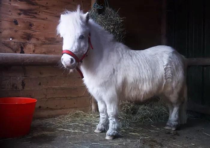 hacen-abrigo-para-su-pony1