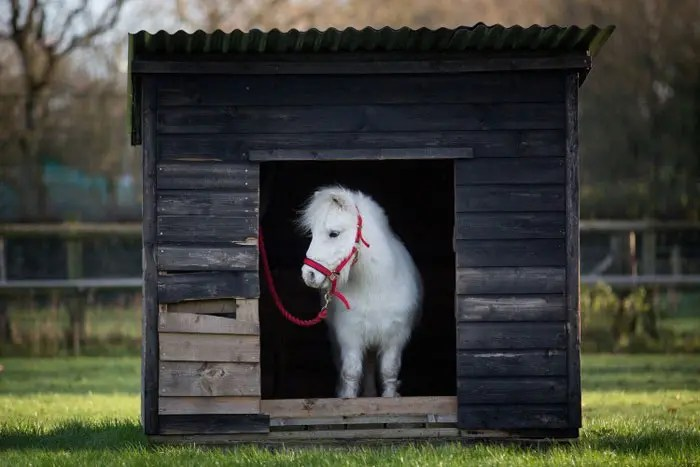 hacen-abrigo-para-su-pony4