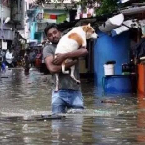 perro-rescata-sus-cachorros-en-inundacion-india3