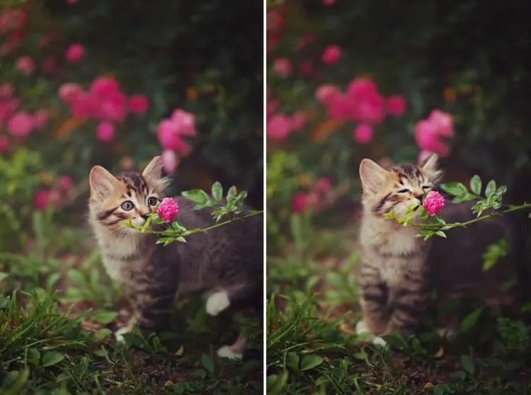 animales-oliendo-flores-14