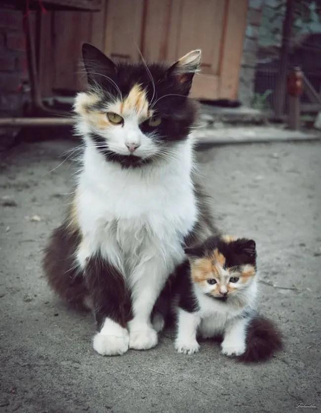 gatos y miniaturas 7