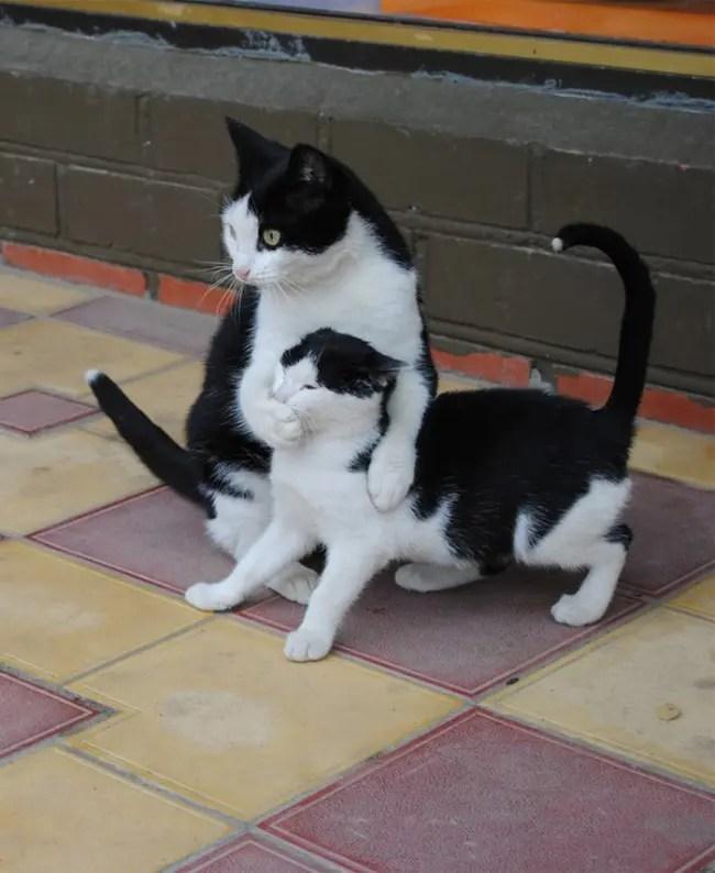 gatos y miniaturas 9