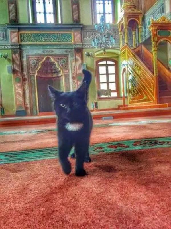 gatos bienvenidos en mezquita 2
