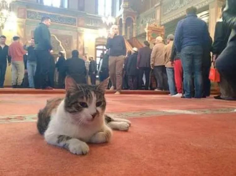 gatos bienvenidos en mezquita 3