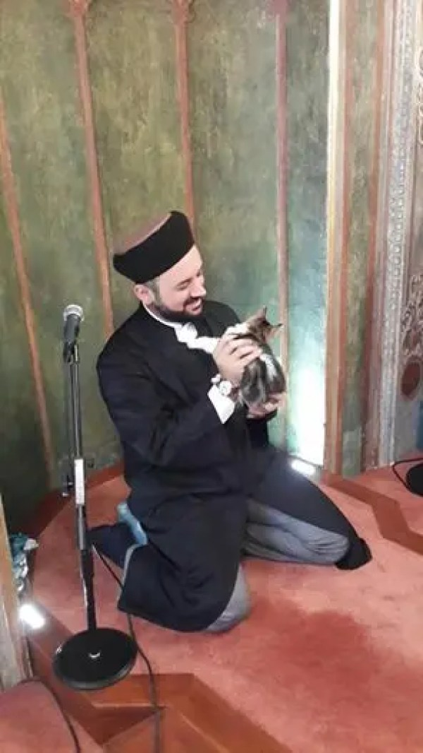 gatos bienvenidos en mezquita 5