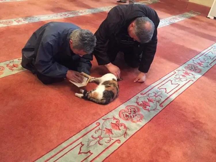 gatos bienvenidos en mezquita 6