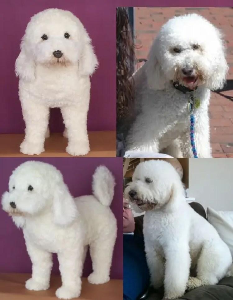 perritos-clonados-en-peluche-22