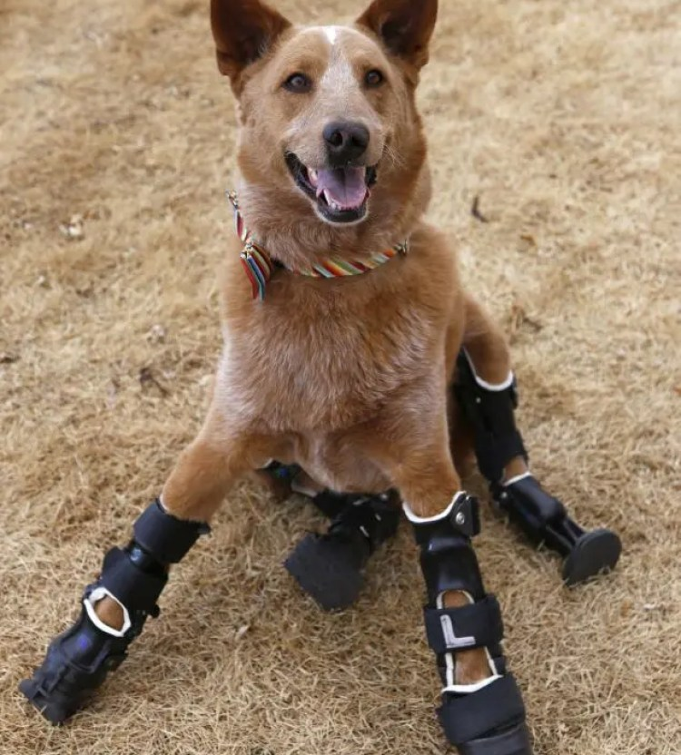 sorprendentes-animales-con-discapacidades-8