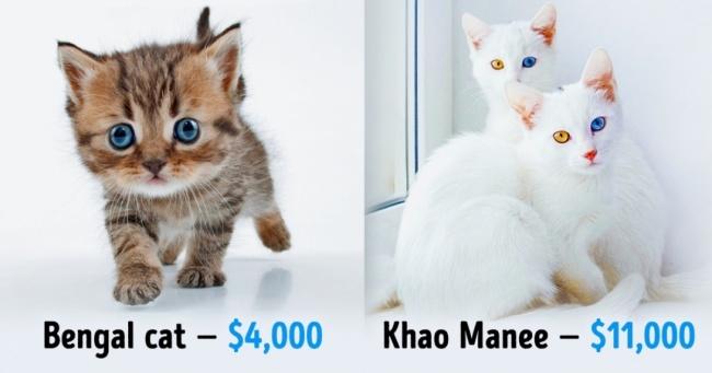 Cute Bengal Cats Wallpaper Birbirinden G 252 Zel Ama Servet Değerinde 19 Harika Kedi