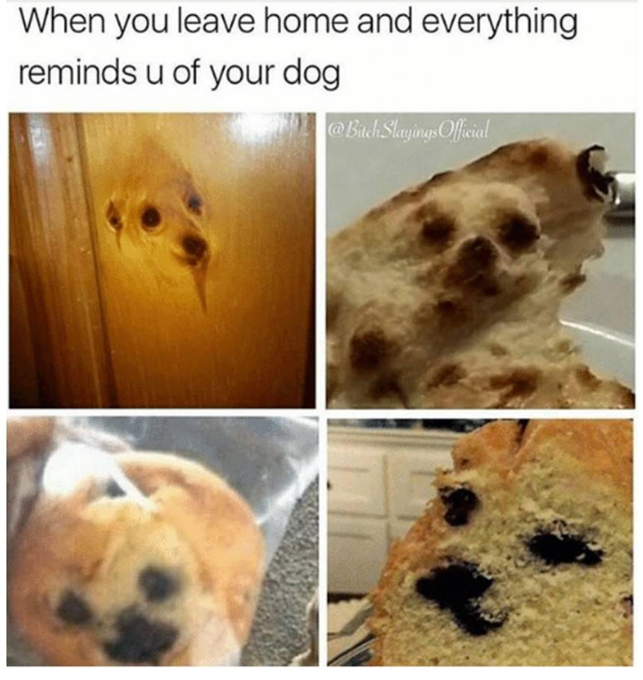 I Miss You My Lovely Dog - Meme