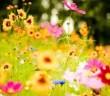 flori-in-vis