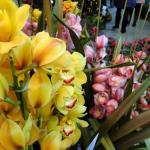 Hong Kong's Flower Market : Kowloon