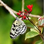 Butterflies at Fairchild Tropical Botanical Gardens : Miami